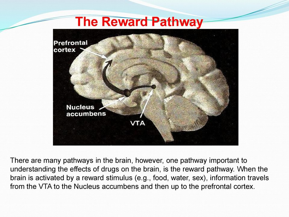 When the brain is activated by a reward stimulus (e.g.