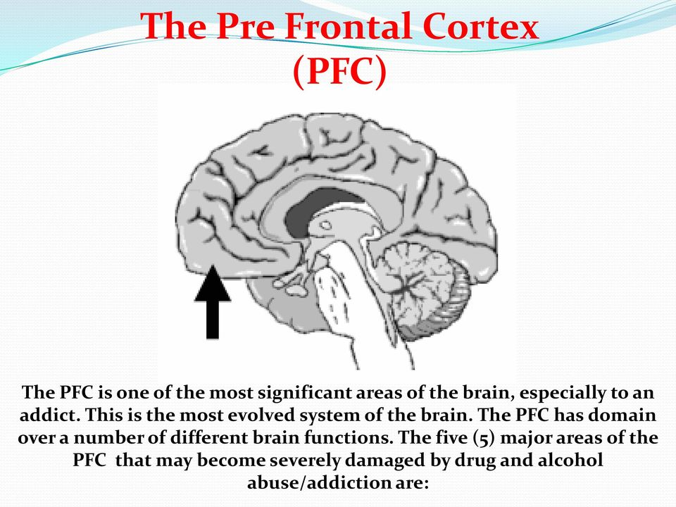 The PFC has domain over a number of different brain functions.