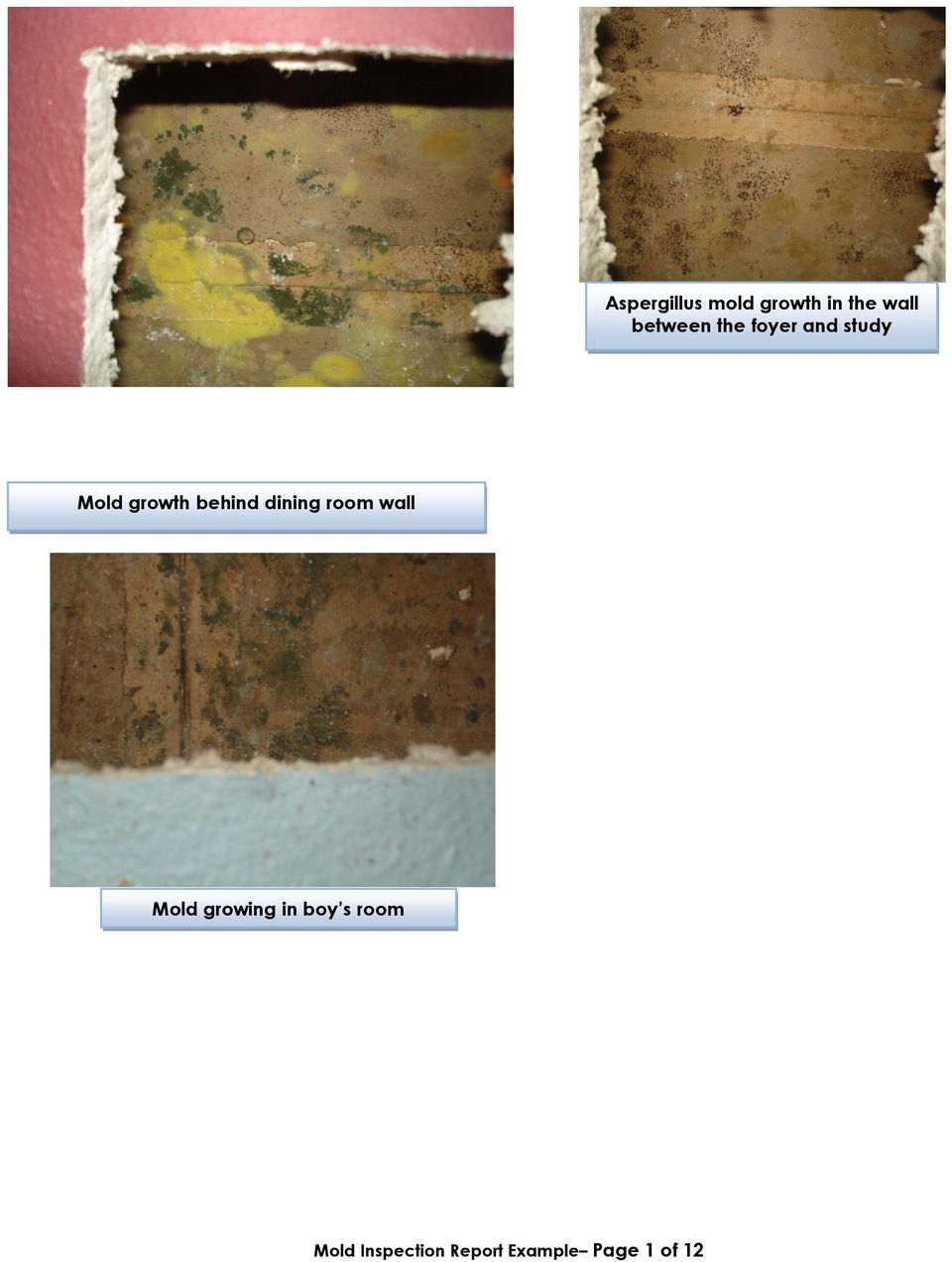 behind dining room wall Mold growing in
