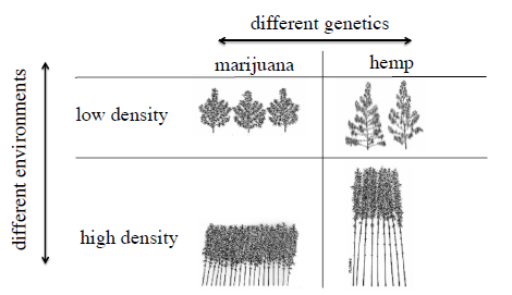 status of marijuana. Plants grown of oilseed are also marketed according to the purity of the product, and the mixing of off-type genotypes would degrade the value of the crop.