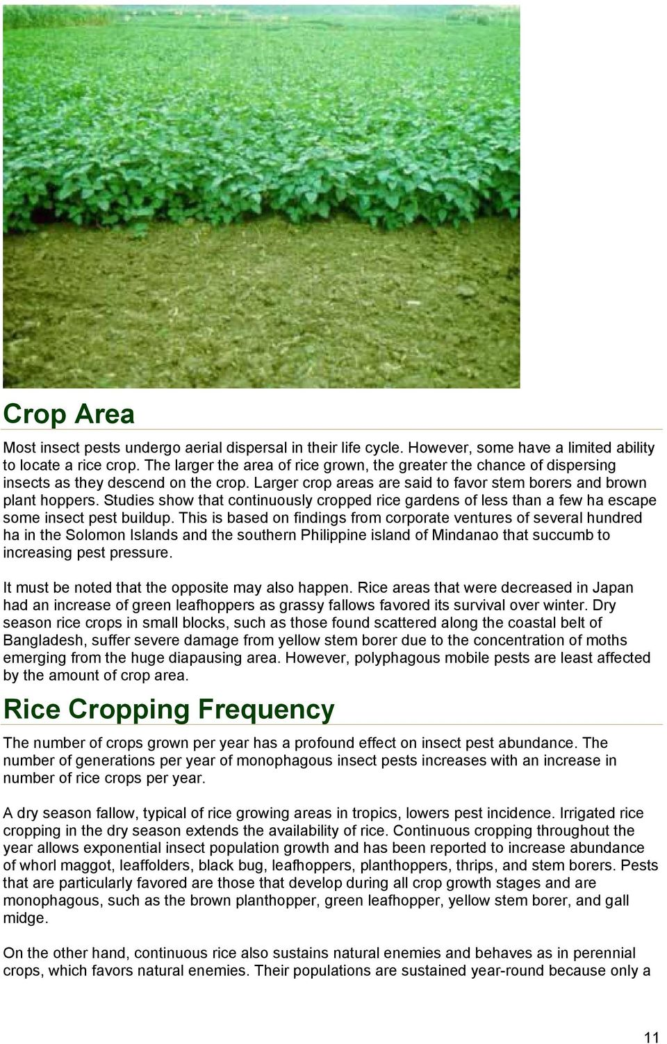Studies show that continuously cropped rice gardens of less than a few ha escape some insect pest buildup.
