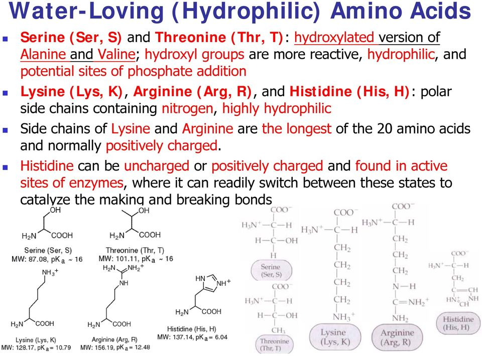 nitrogen, highly hydrophilic Side chains of Lysine and Arginine are the longest of the 20 amino acids and normally positively charged.
