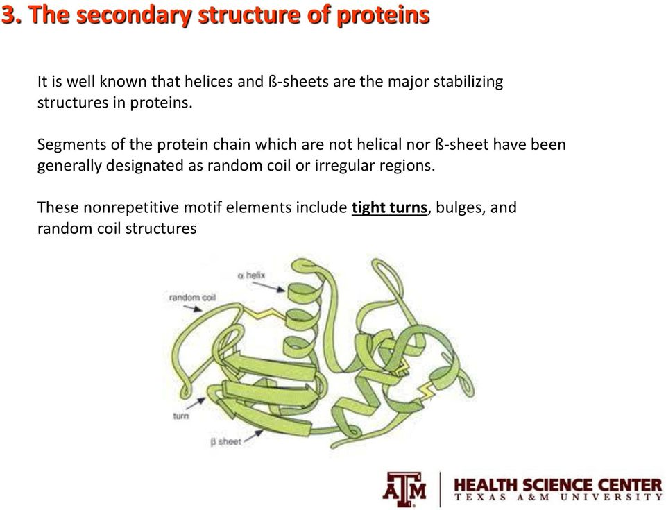 Segments of the protein chain which are not helical nor ß-sheet have been generally