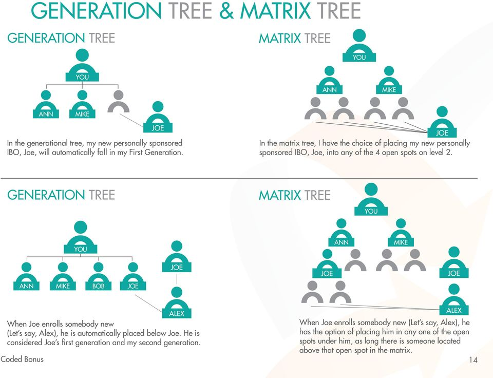 GENERATION TREE MATRIX TREE YOU YOU ANN MIKE JOE JOE JOE ANN MIKE BOB JOE ALEX When Joe enrolls somebody new (Let s say, Alex), he is automatically placed below Joe.