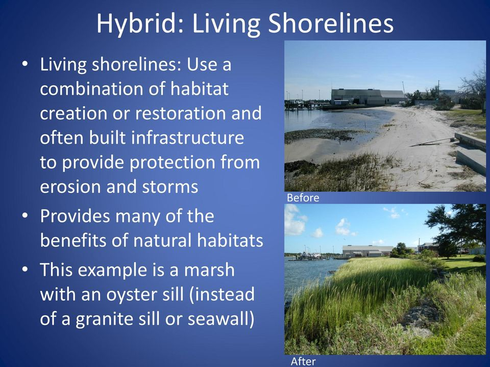 from erosion and storms Provides many of the benefits of natural habitats This