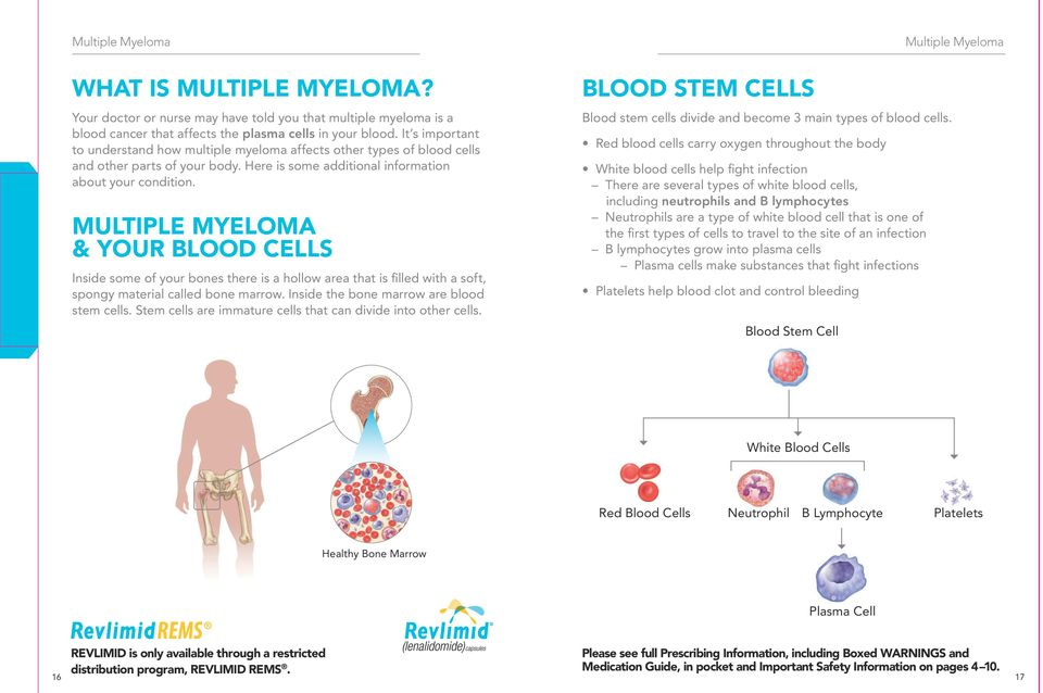 MULTIPLE MYELOMA & YOUR BLOOD CELLS Inside some of your bones there is a hollow area that is filled with a soft, spongy material called bone marrow. Inside the bone marrow are blood stem cells.