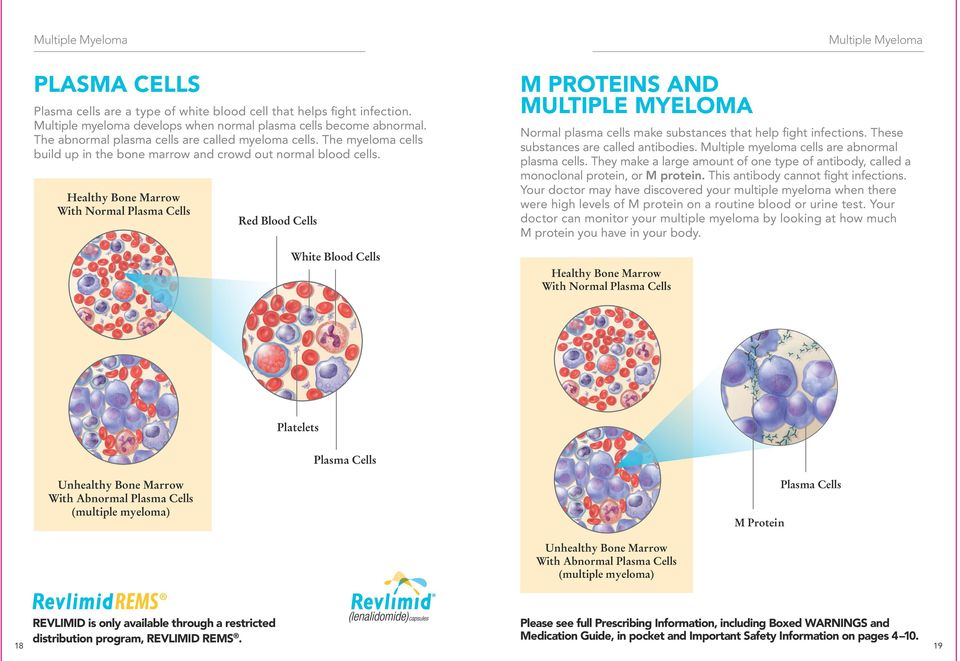 Healthy Bone Marrow With Normal Plasma Cells Red Blood Cells White Blood Cells M PROTEINS AND MULTIPLE MYELOMA Healthy Bone Marrow With Normal Plasma Cells Multiple Myeloma Normal plasma cells make