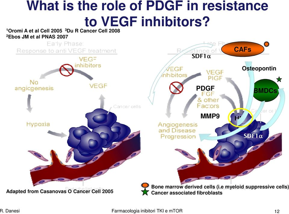 Osteopontin PDGF BMDCs MMP9 SDF1α Adapted from Casanovas O Cancer Cell 2005 Bone marrow