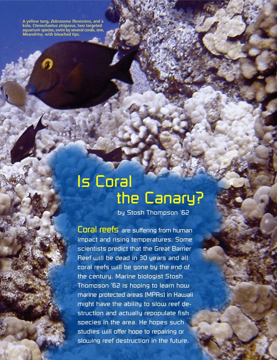 Some scientists predict that the Great Barrier Reef will be dead in 30 years and all coral reefs will be gone by the end of the century.