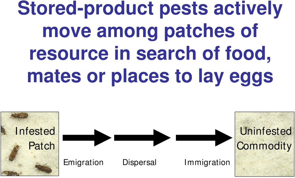 mates or places to lay eggs Infested Patch