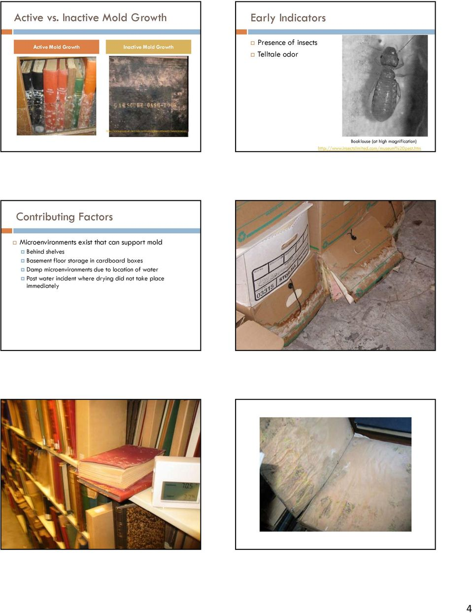ac.uk/services/archives/preservationunit/mouldremoval/ Booklouse (at high magnification) http://www.insectslimited.