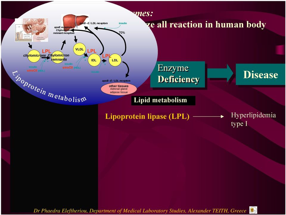 insulin αποcii (HDL) LPL IDL insulin LPL LDL + apoβ Ε / LDL receptors other tissues Adrenal gland