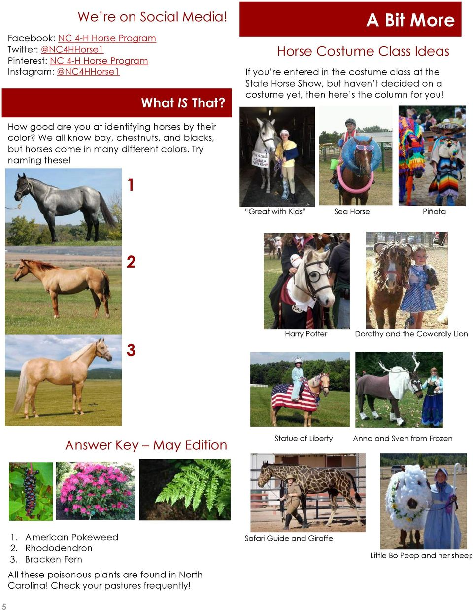 How good are you at identifying horses by their color? We all know bay, chestnuts, and blacks, but horses come in many different colors. Try naming these!