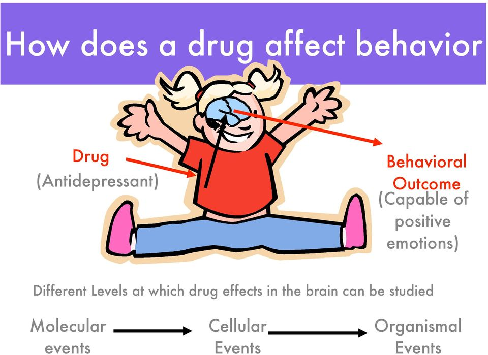 Different Levels at which drug effects in the brain can