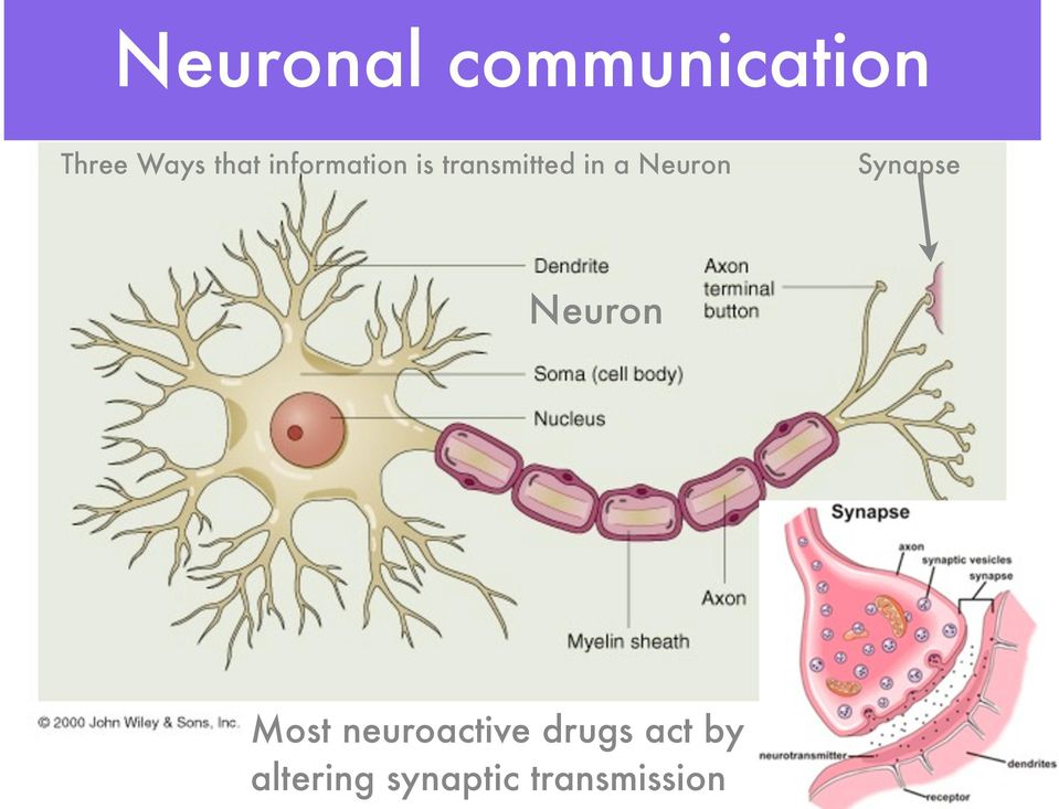 Synapse Neuron Most neuroactive drugs