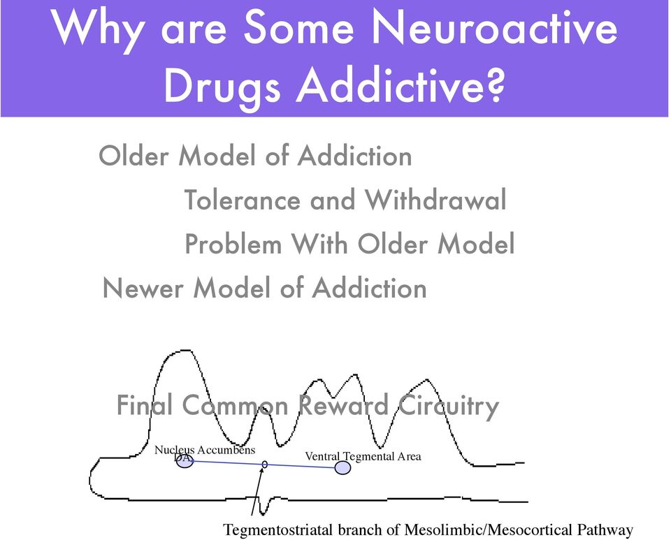 Model Newer Model of Addiction Final Common Reward Circuitry Nucleus