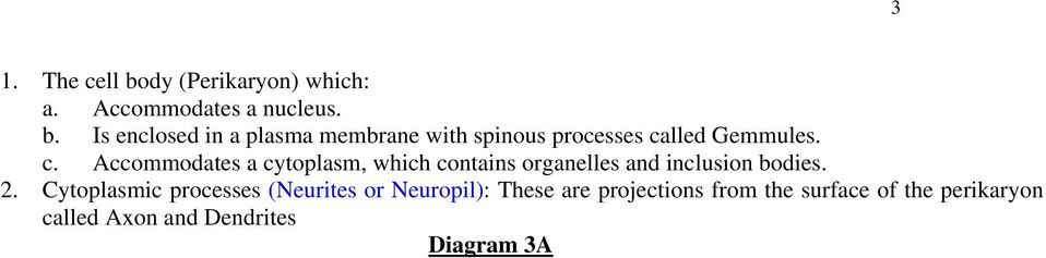 Cytoplasmic processes (Neurites or Neuropil): These are projections from the surface of