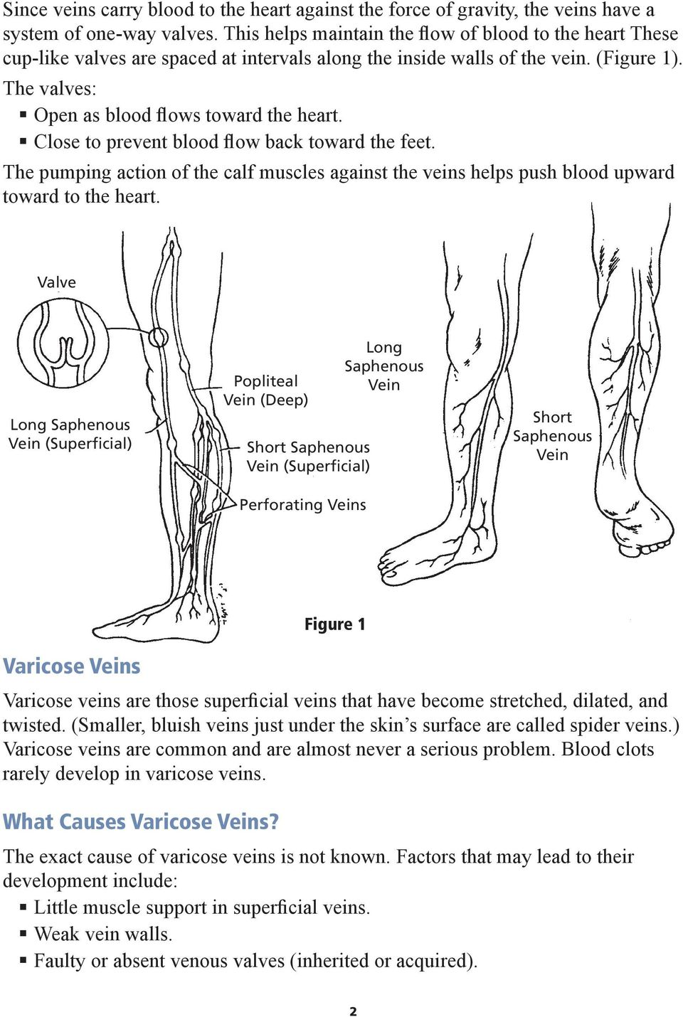 Close to prevent blood flow back toward the feet. The pumping action of the calf muscles against the veins helps push blood upward toward to the heart.
