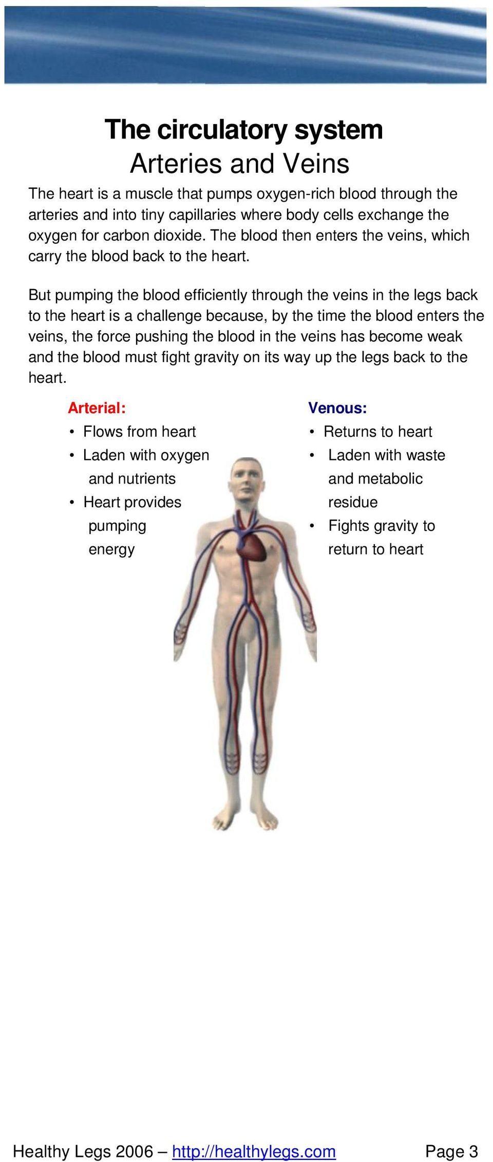 But pumping the blood efficiently through the veins in the legs back to the heart is a challenge because, by the time the blood enters the veins, the force pushing the blood in the veins has