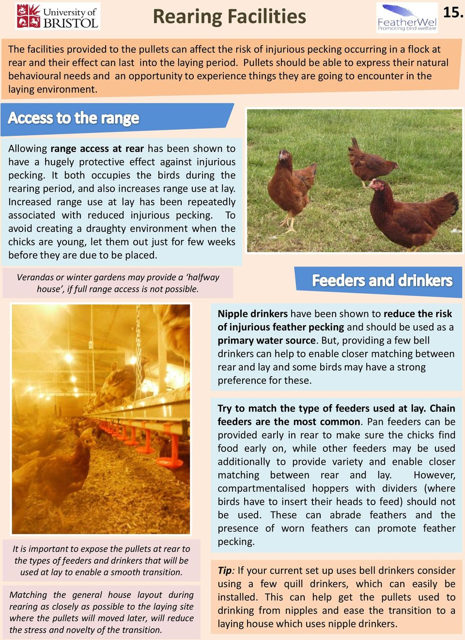 Allowing range access at rear has been shown to have a hugely protective effect against injurious pecking. It both occupies the birds during the rearing period, and also increases range use at lay.