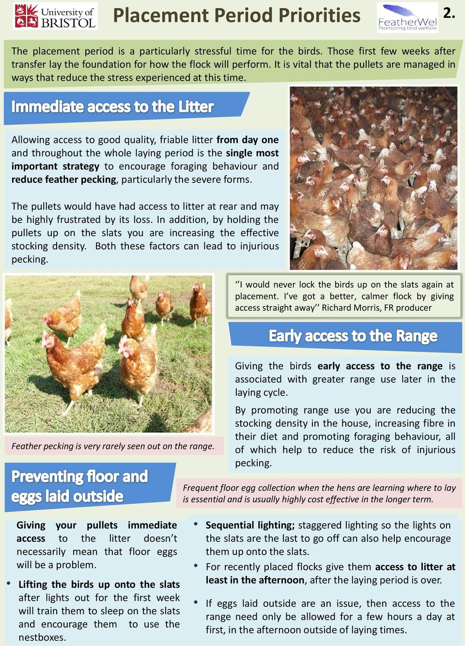 Allowing access to good quality, friable litter from day one and throughout the whole laying period is the single most important strategy to encourage foraging behaviour and reduce feather pecking,