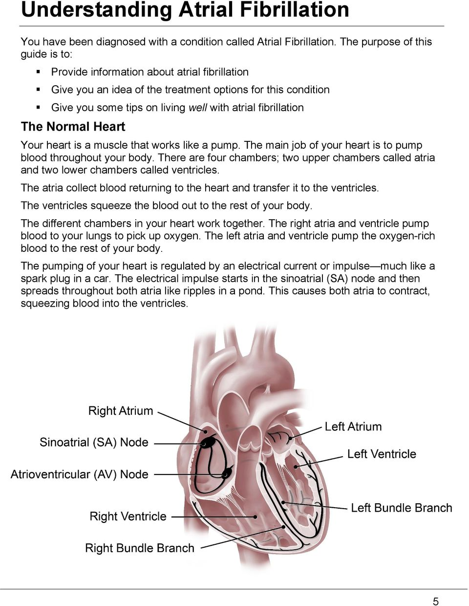 The Normal Heart Your heart is a muscle that works like a pump. The main job of your heart is to pump blood throughout your body.