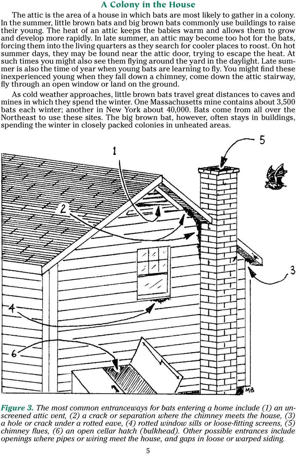 In late summer, an attic may become too hot for the bats, forcing them into the living quarters as they search for cooler places to roost.