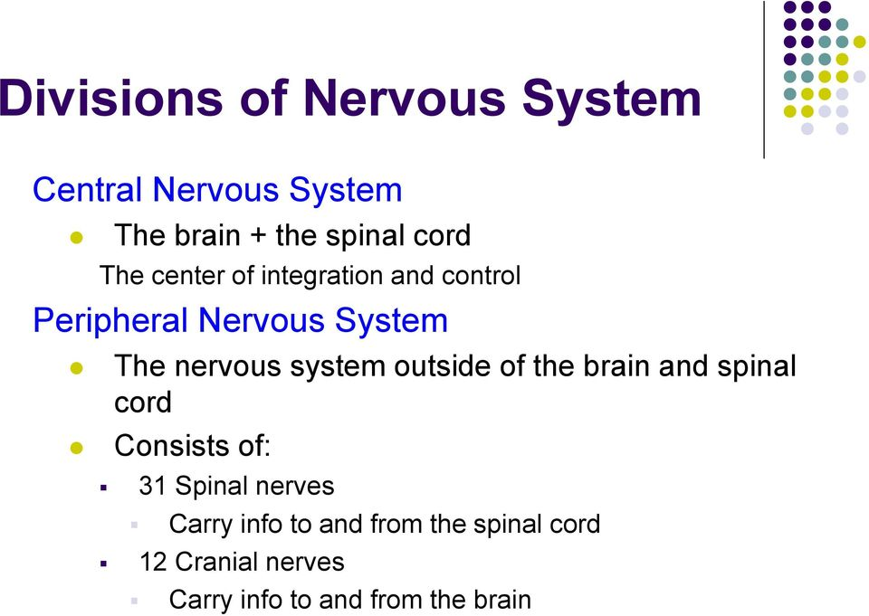 system outside of the brain and spinal cord Consists of: 31 Spinal nerves Carry