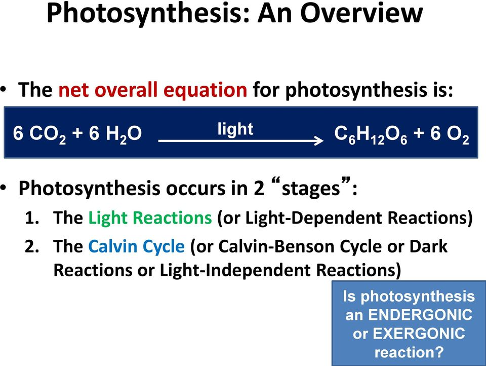 The Light Reactions (or Light-Dependent Reactions) 2.