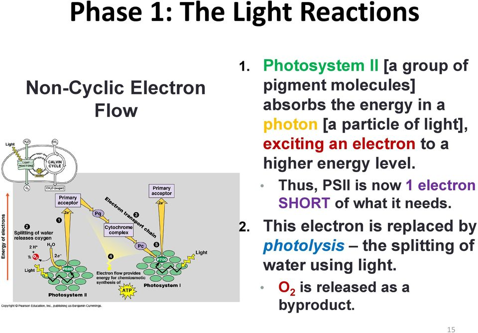 light], exciting an electron to a higher energy level.