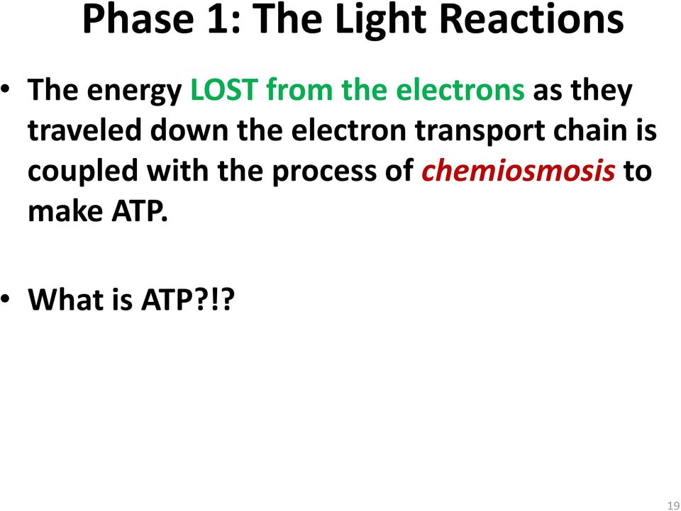 electron transport chain is coupled with the