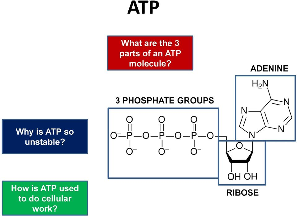 ADENINE 3 PHOSPHATE GROUPS Why is