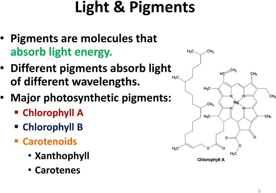 Different pigments absorb light of different
