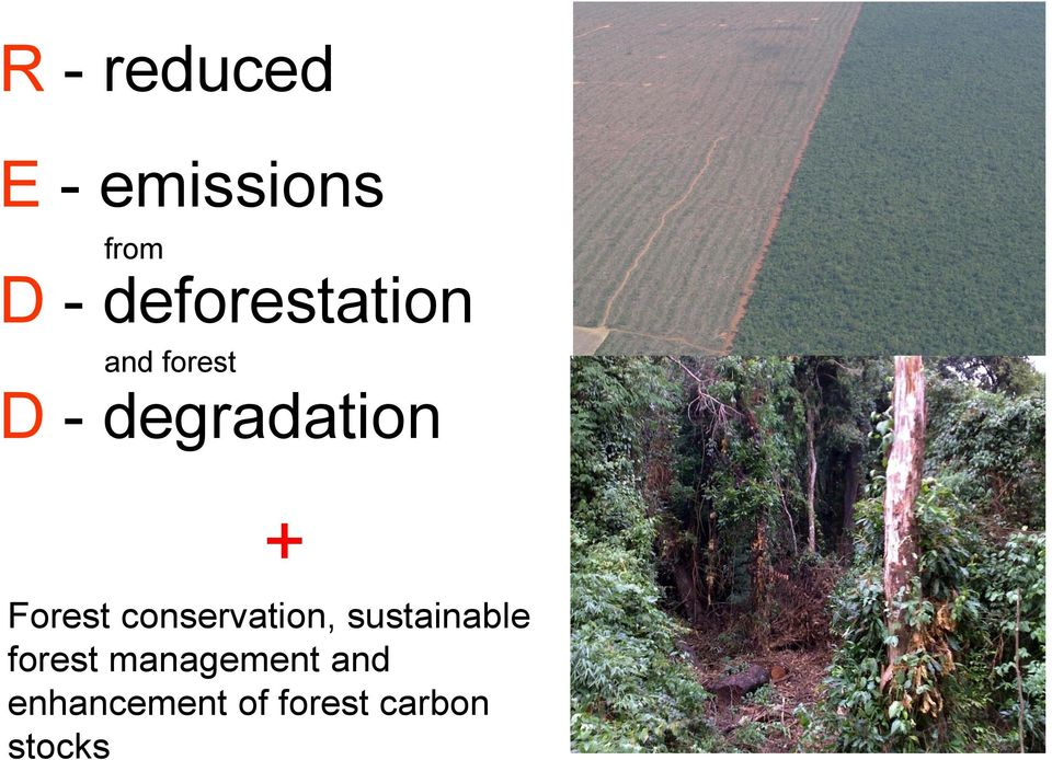 + Forest conservation, sustainable forest