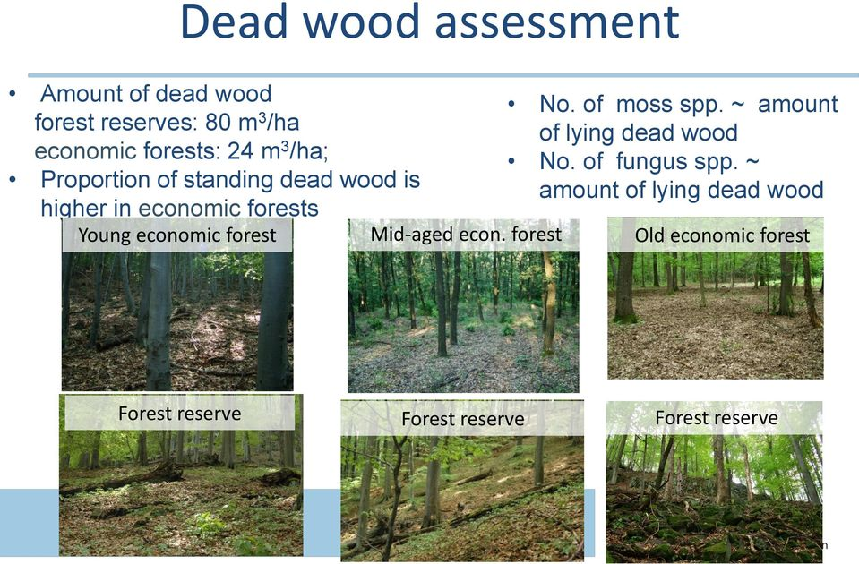 ~ amount of lying dead wood No. of fungus spp.