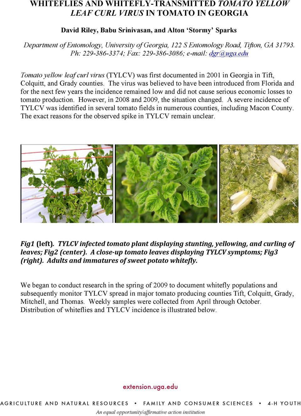 edu Tomato yellow leaf curl virus (TYLCV) was first documented in 2001 in Georgia in Tift, Colquitt, and Grady counties.