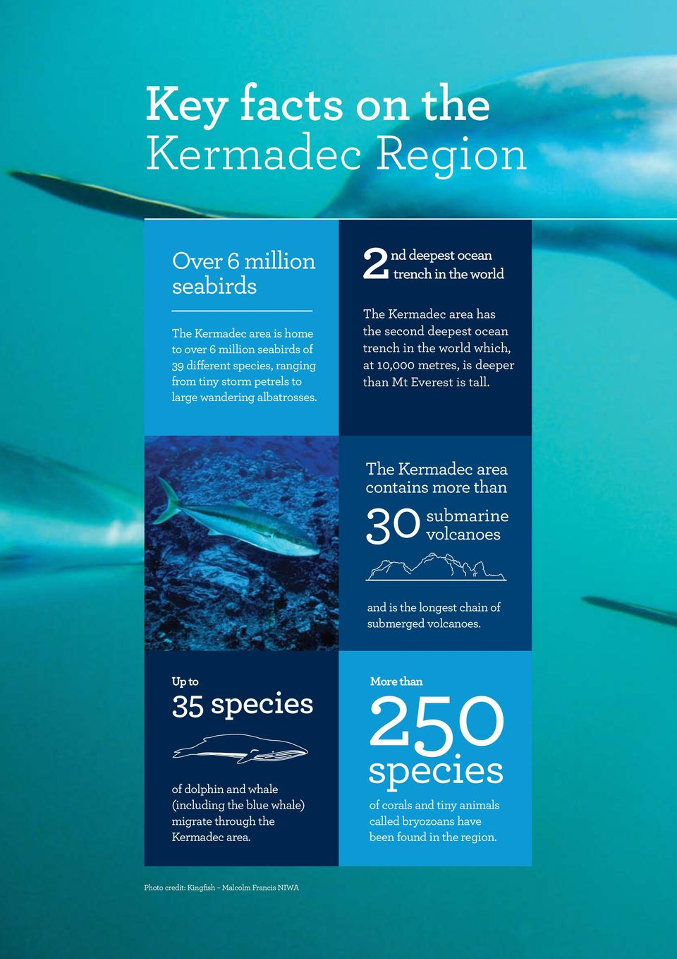 2 nd deepest ocean trench in the world The Kermadec area has the second deepest ocean trench in the world which, at 10,000 metres, is deeper than Mt Everest is tall.