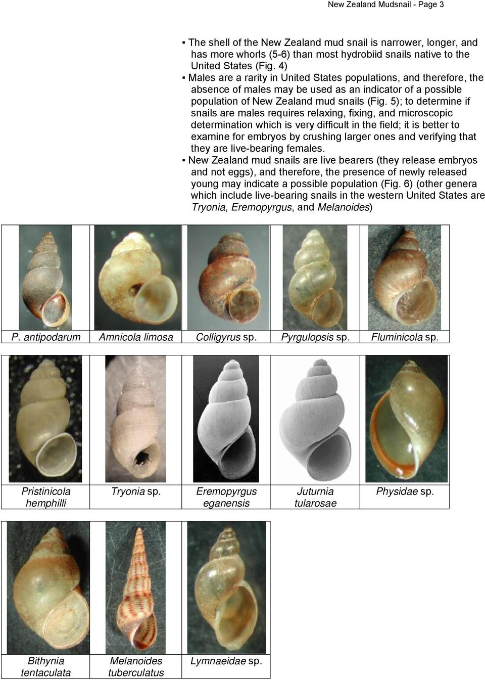 5); to determine if snails are males requires relaxing, fixing, and microscopic determination which is very difficult in the field; it is better to examine for embryos by crushing larger ones and