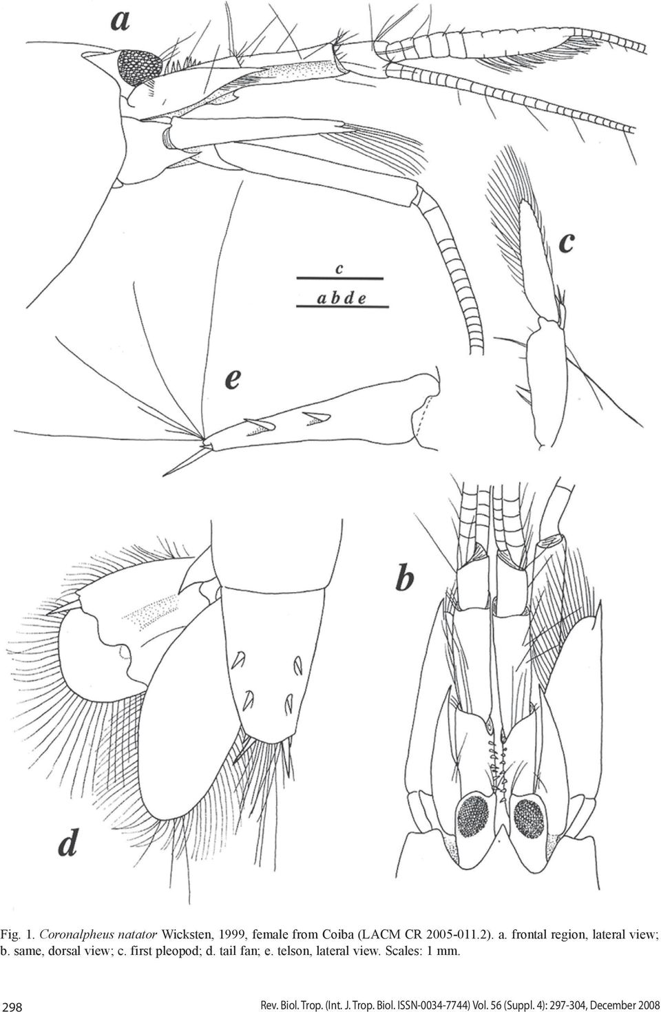 a. frontal region, lateral view; b. same, dorsal view; c. first pleopod; d.