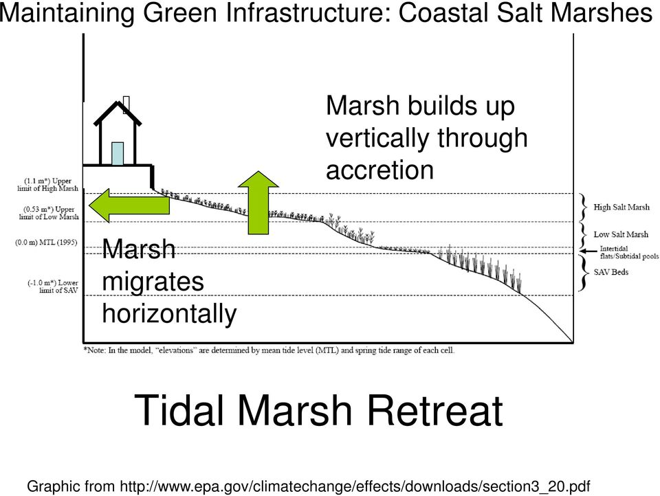 migrates horizontally Tidal Marsh Retreat Graphic from