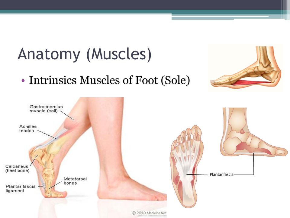 Funky Foot Plantar Anatomy Gift Anatomy And Physiology Biology