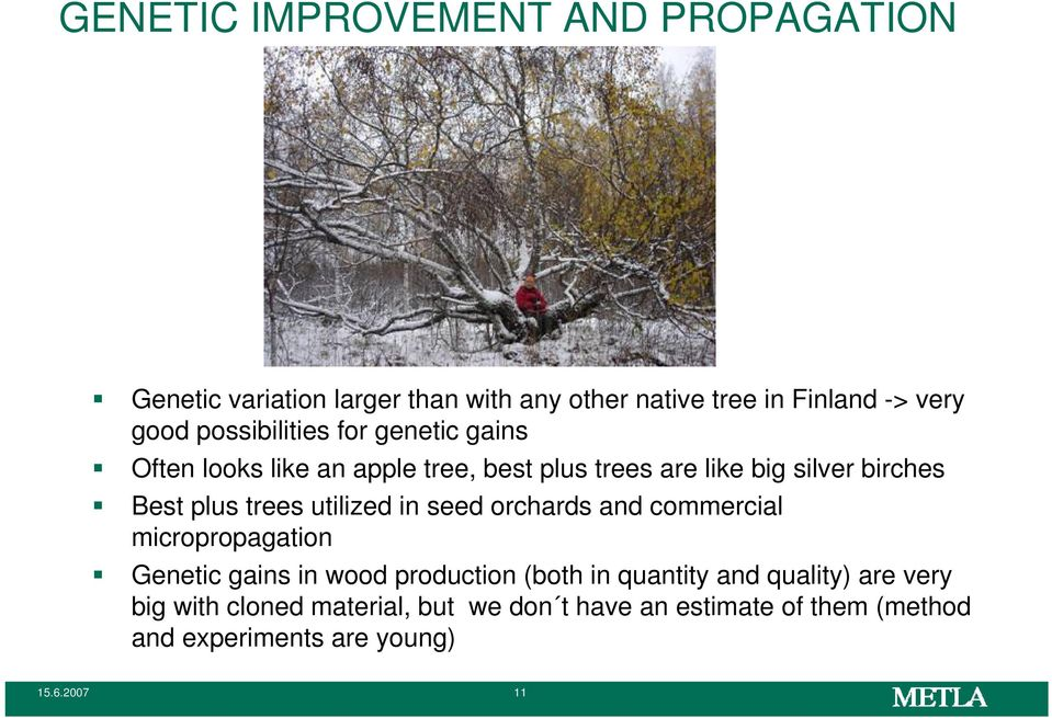 trees utilized in seed orchards and commercial micropropagation Genetic gains in wood production (both in quantity and