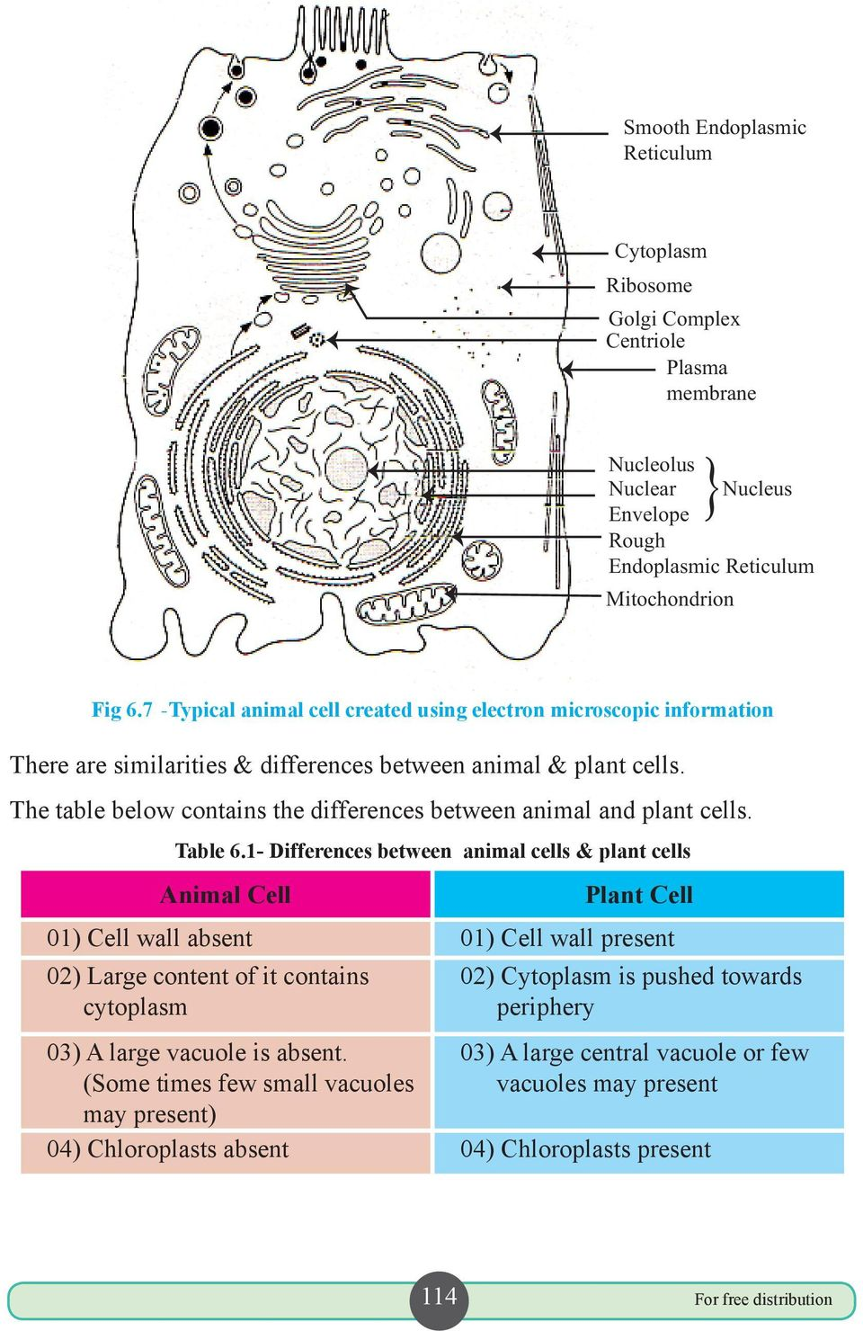 The table below contains the differences between animal and plant cells. Table 6.