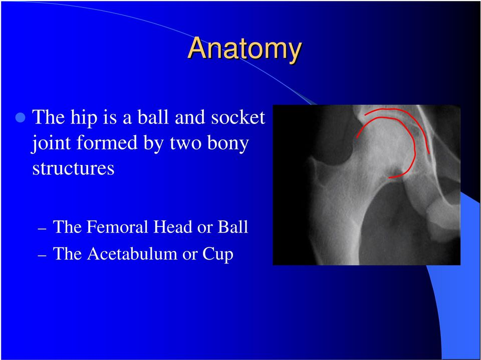 bony structures The Femoral