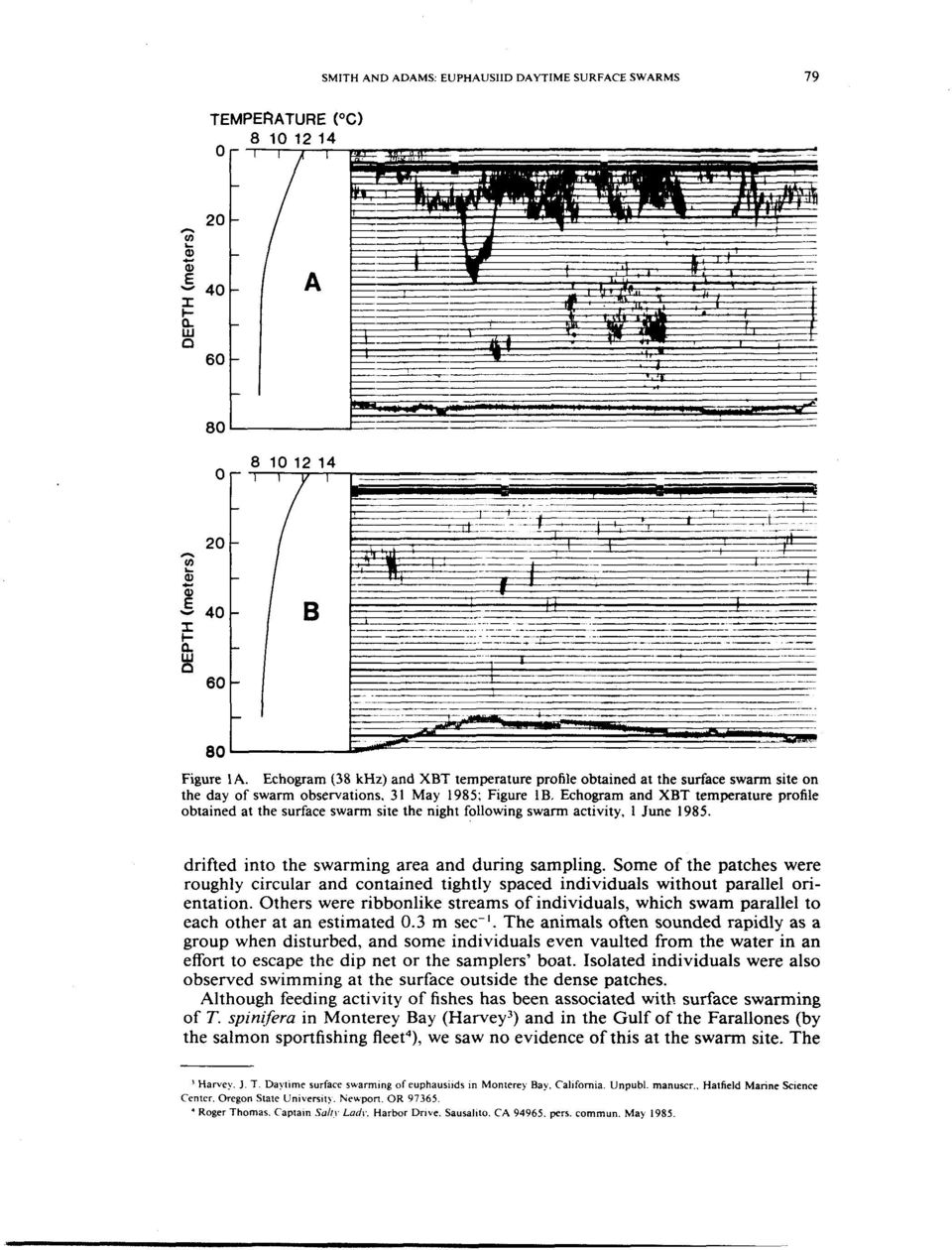 Echogram and XBT temperature profile obtained at the surface swarm site the night following swarm activity, 1 June 1985. drifted into the swarming area and during sampling.