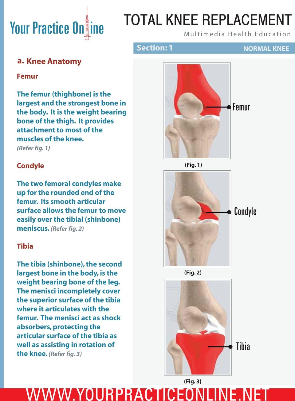 Its smooth articular surface allows the femur to move easily over the tibial (shinbone) meniscus. (Refer fig.