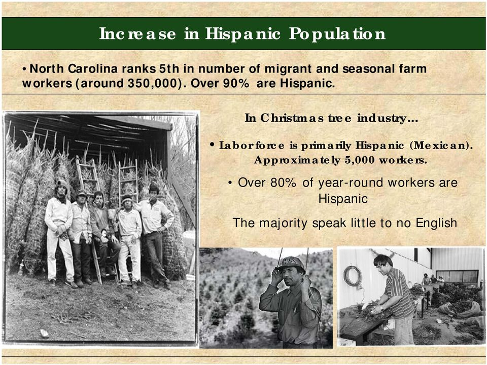 In Christmas tree industry... Labor force is primarily Hispanic (Mexican).