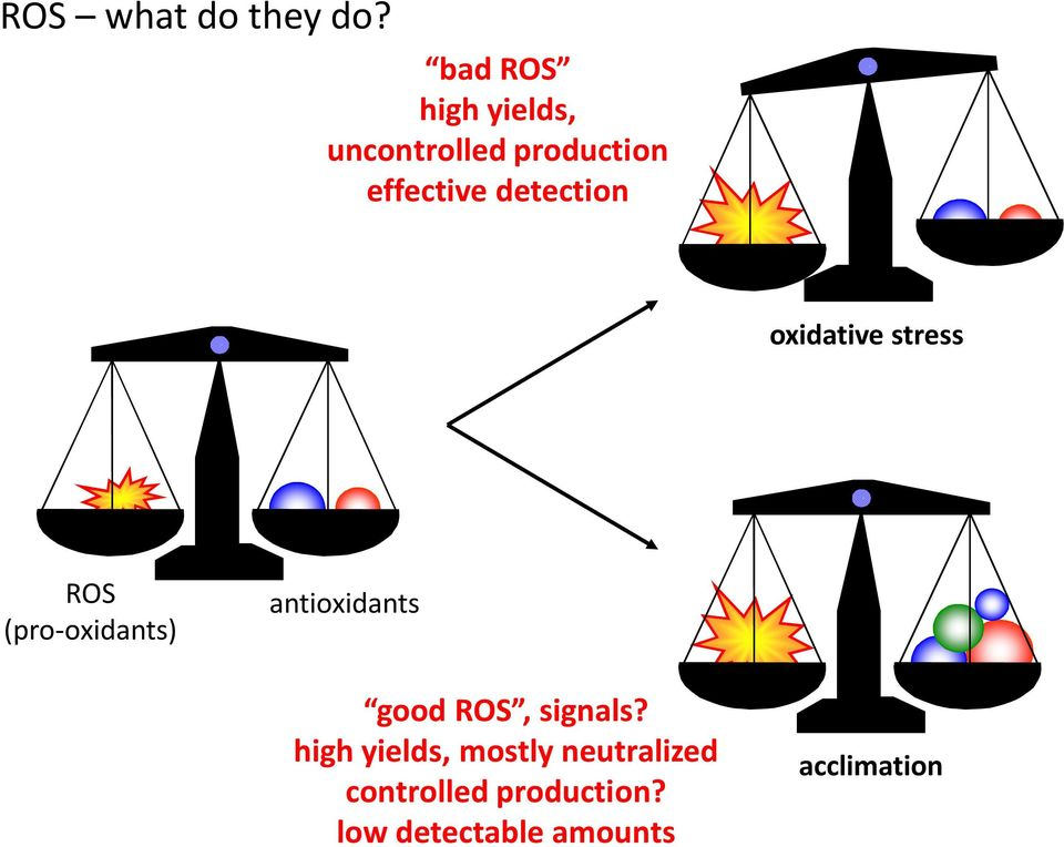 detection oxidative stress ROS (pro-oxidants) antioxidants