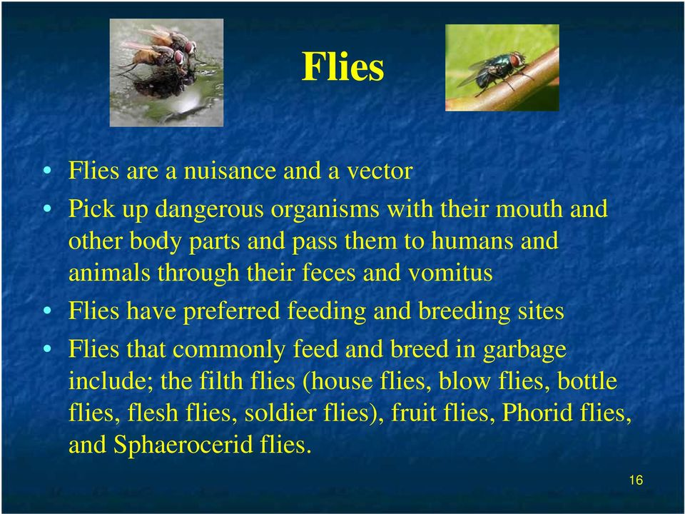 and breeding sites Flies that commonly feed and breed in garbage include; the filth flies (house flies,
