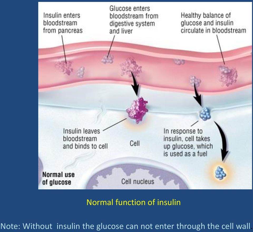 insulin the glucose can
